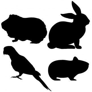Kisállat eledel és felszerelés   Small pets food & accessories